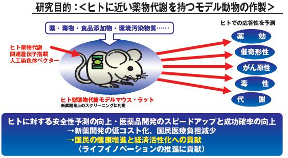ヒト薬物代謝 マウス