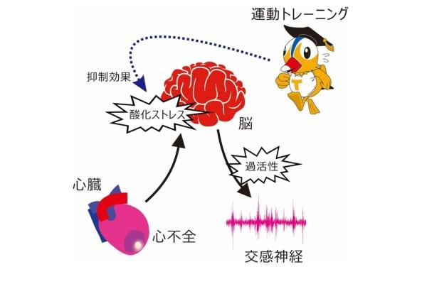 酸化ストレス図