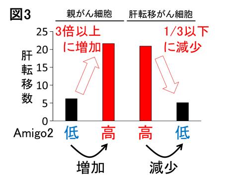 Amigo図3