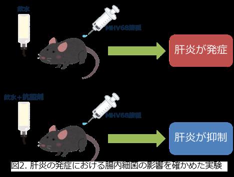 トップ > 研究情報 > この人に注目! 金井先生02