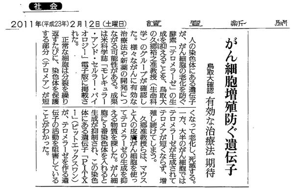 PITX1-読売
