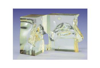 鼻腔透明モデル